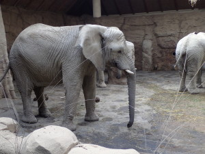 Výlet  Zoo Lešná, červen 2017